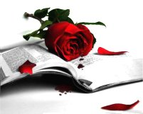 rose book - Dost...
